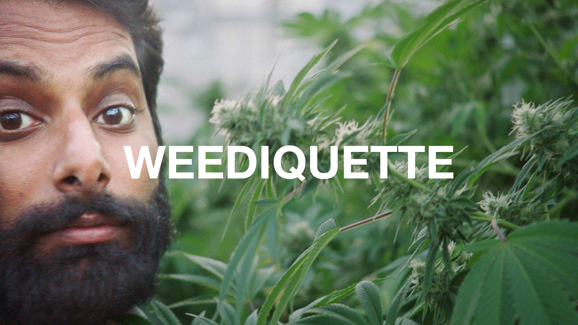 Image result for Weediquette